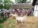 12. A owca i koza: Czego tak patrzą? Pierwszy raz nas widzą?!