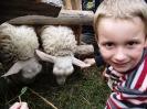 19. I owieczki też wcinają